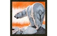 Bear and Borealis